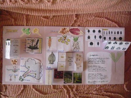 LAPBOOK ( libro fai da te che si ricava da una semplice cartella a tre lembi e qualche foglio di carta colorata) P1110025